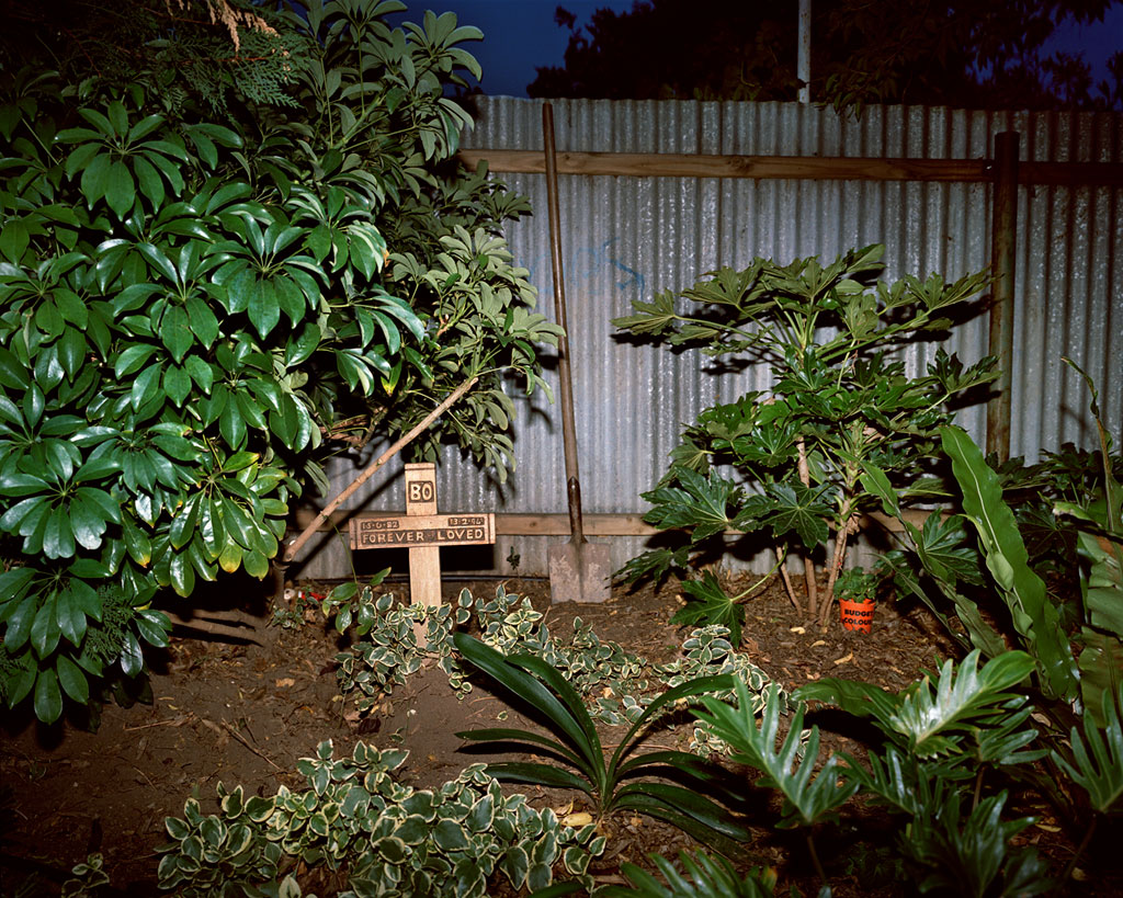 Trent parke backyard grave from the christmas tree bucket